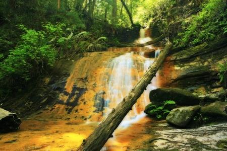 Lush rain forest waterfall: Golden Cascade Falls in Big Basin State Park, California Stock Photo - 12304472