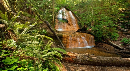 Lush rain forest waterfall and ferns: Golden Cascade Falls in Big Basin State Park, California Stock Photo - 12304477