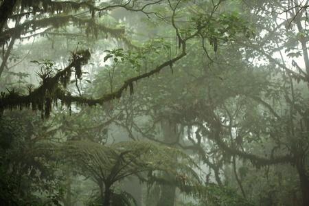 jungle green: Lush tropical dosel del bosque en Costa Rica