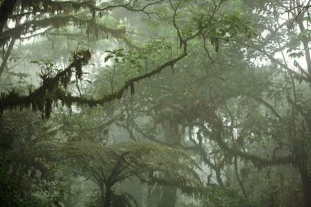 breen: Lush tropical rain forest canopy in Costa Rica Stock Photo