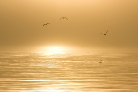 cormorants: A calm, foggy sunrise over Half Moon Bay, California, with cormorants in the frame Stock Photo