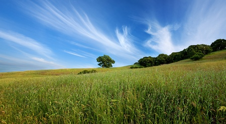 Panorama of beautiful sky, lone tree, and green field in central California in summer photo
