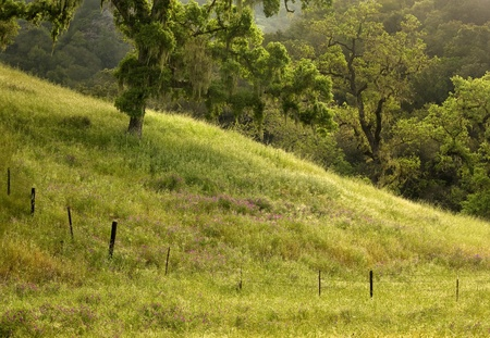 Picturesque pasture in Henry Coe State Park, California, spring at dawn  photo