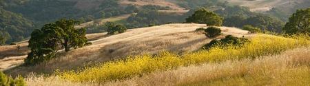 봄 겨자 꽃 동안 캘리포니아에있는 언덕의 파노라마