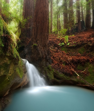 Small waterfall in beautiful California redwood forest