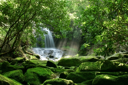A hidden waterfall in a dense rain forest, with mist being lit up by sunlight and mossy rocks in the foreground