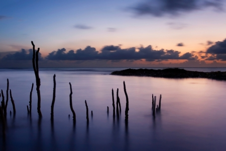 Beautiful Tropical Sunrise behind silhouetted mangrove roots