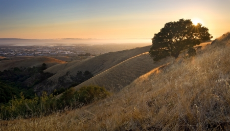 East Bay  San Francisco Bay Area  from above in the hills at sunset in summer