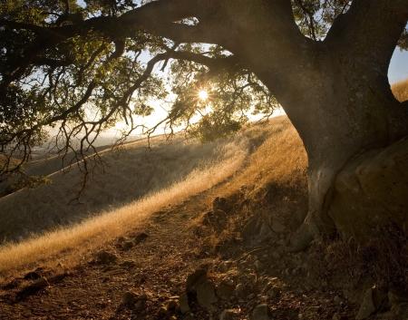 カリフォルニア州東湾区域で日当たりの良い夕日の美しい、怪しげな、丘陵性草原を通してパス
