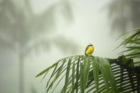 Small bird in Costa Rican Rainforest
