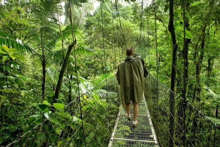 poncho: Anonymous scientiest walks on a canopy bridge in a dense tropical rain forest in Costa Rica Stock Photo
