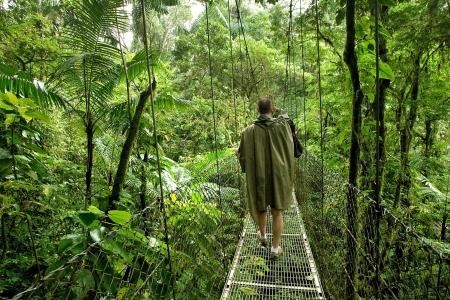 Scientiest Anonymous marche sur un pont couvert dans une forêt tropicale dense au Costa Rica Banque d'images - 14813739