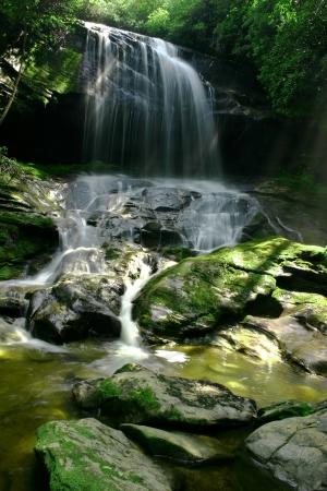 Waterfall in lush rain forest photo