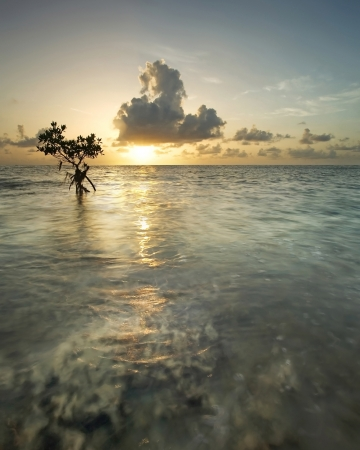 Majestic sunrise with mangrove tree, near Miami photo