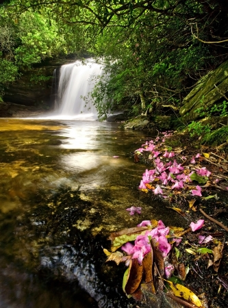 Beautiful waterfall in lush rain forest with pink flowers Stok Fotoğraf