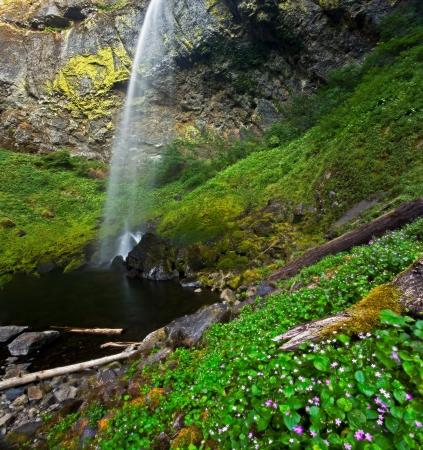 Beautiful Elowah Falls in lush rain forest of Columbia River Gorge area of Oregon photo
