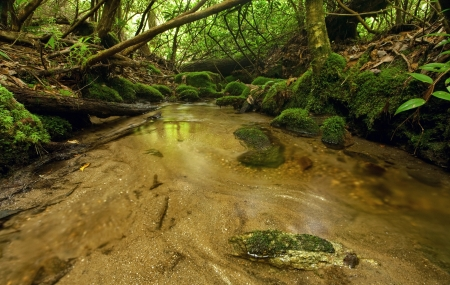 appalachian mountains: Small silty stream lined with trees and moss in a dense, lush rain forest Stock Photo