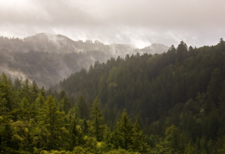 Beautiful remote evergreen forest bathed in misty fog after a passing storm photo