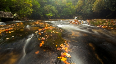 Temperate rain forest and the wild and scenic Chattooga River in North Carolina in beautiful fall colors photo