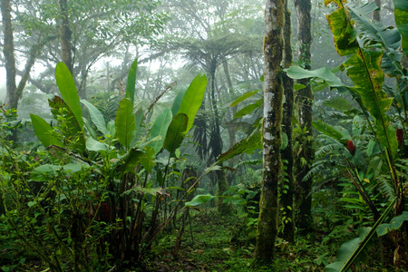 Scene looking into dense lush tropical rain forest in Costa Rica
