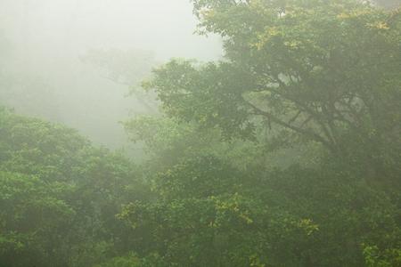 dense forest: A scene of a tropical jungle canopy in dense fog in Costa Rica