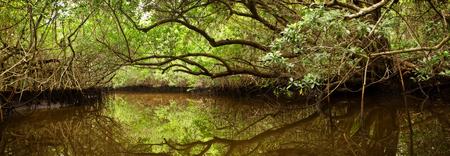 플로리다에 버 글레이즈에있는 빽빽한 맹그로브 숲과 기이 한 크릭