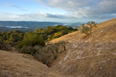 bay area: Beautiful gentle hillsides in Californias Bay Area, after a light snowfall in winter