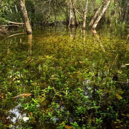 Everglades national park: Floridas River of Grass, another name for Everglades National Park