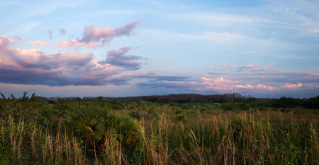 sawgrass: A peaceful calm suset over Florida Everglades sawgrass prairies Stock Photo