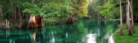 Ichetucknee 스프링스 일출, 플로리다에서 아름 다운 봄 먹이 강 파노라마