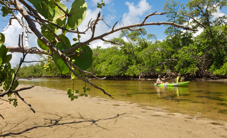 Father and son kayaking in boat, exploring the wilderness of South Florida together, including mangrove forest and shallow tidal estuary.