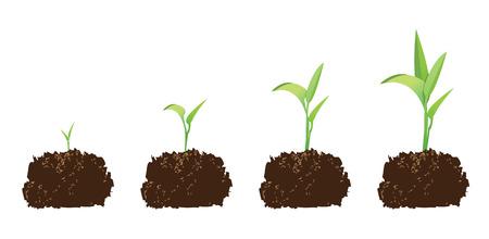 germination: cultivos de pl�ntulas o la germinaci�n de una semilla, para ilustrar el concepto de crecimiento.  Vectores