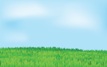 landscape with green field and blue sky in horizontal view. Stock Vector - 7504103