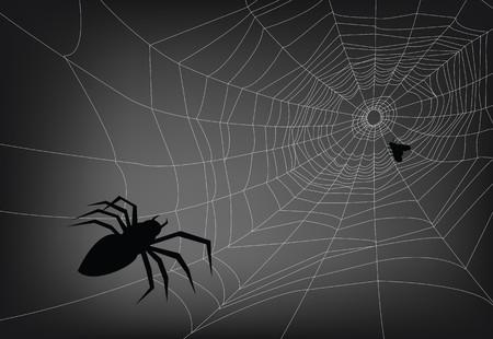 spider web illustration, for background. Vector