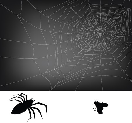 spider web illustration, for background. Stock Vector - 8006039