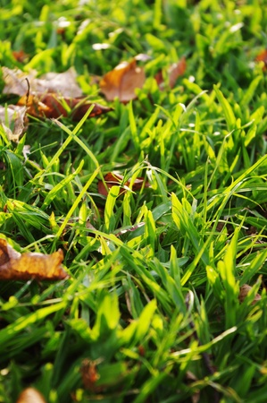 green grass background with sunlight shinning through. Stock Photo - 9812826