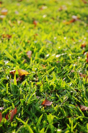 green grass background with sunlight shinning through. Stock Photo - 9812822