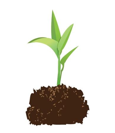 germinación: ilustración de una planta con el suelo.