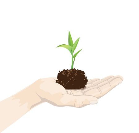 hands holding plant: a hand is holding a seedling, isolated on white. Illustration