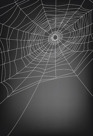 hunted: Ilustraci�n Spider web, para el fondo. Vectores