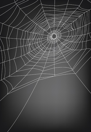 web2: spider web illustration, for background.