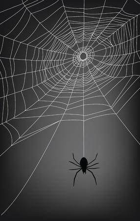 spinnennetz: Spider Web-Abbildung f�r Hintergrund.