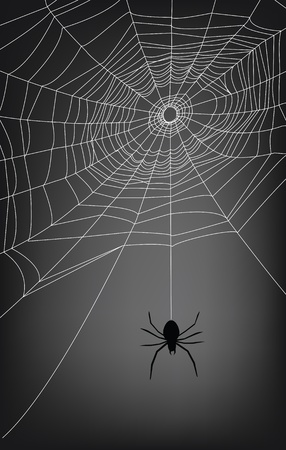 spider web illustration, for background. Vector