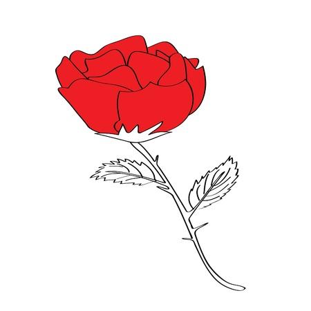 admirer: rose for valentines day, please check my profile for similar drawings.