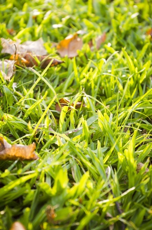green grass background with sunlight shinning through. Stock Photo - 11753240