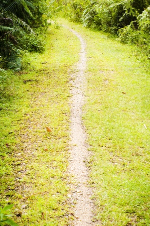 natures: a walking trail in natures that leads to somewhere. Stock Photo