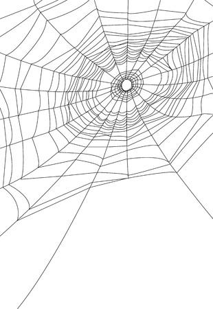 cobweb: spider web or cobweb illustrations   Illustration