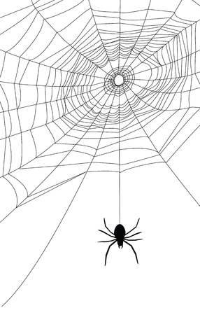 spider web illustration, for background