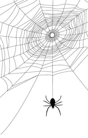 spider web illustration, for background Stock Vector - 15398575