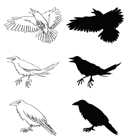 doodle and silhouettes illustrations of crows